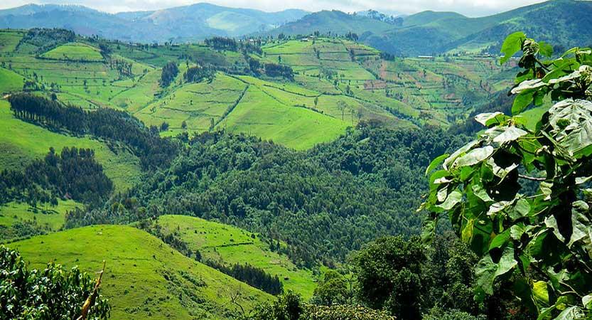 Gishwati Forest Reserve Rwanda