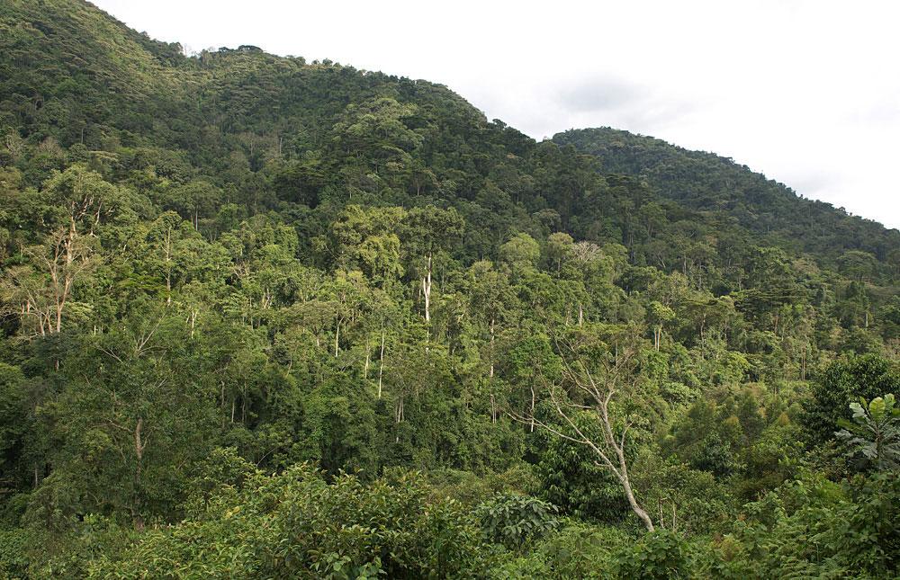 Bwindi Gorilla Habitat